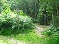 Three Bridleways and one footpath in Perry Wood - geograph.org.uk - 1371861.jpg
