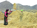 Tibet-5830 - Barley throwing (2667655970).jpg