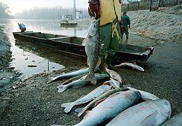 Catastrofe di Baia Mare - Wikipedia 59c2e806105
