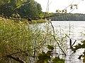 Todnitzsee (Lake Todnitz) - geo.hlipp.de - 29506.jpg