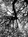 Tree - panoramio (32).jpg