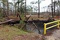 Tree down at Cypress Cove Nature Park.jpg