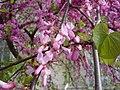 Tree flower dsc00981.jpg