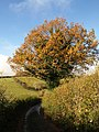 Tree on Magpie Hill - geograph.org.uk - 1054062.jpg