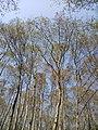 Trees at Shivapuri National Park.jpg