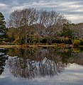 Trees reflected in a pond, The Groynes, Christchurch, New Zealand.jpg