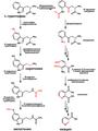 Tryptophan metabolism rus.png
