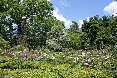 Tudor Place flower garden 2011.jpg