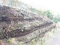 Tuffstein im Vulkangarten - geo.hlipp.de - 6685.jpg