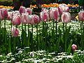 Tulips at Floriade 2004.JPG