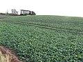 Turnip field, Sheriffside - geograph.org.uk - 306846.jpg