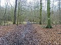 Turville Wood - geograph.org.uk - 1174644.jpg