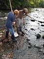 Two students collecting aquatic macroinvertebrates (5029713328).jpg