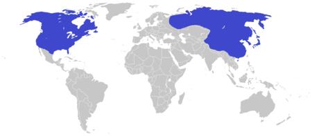Tyrannosaurus distribution map.png