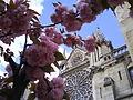 Une cathédrale à travers les fleurs....JPG