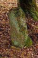 Unterhölzer Wald-3535.jpg