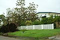 Uprooted tree in Townsville.jpg