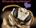 Valentine Nomia (32489626850).jpg