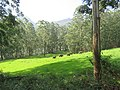 Views around Munnar, Kerala (90).jpg