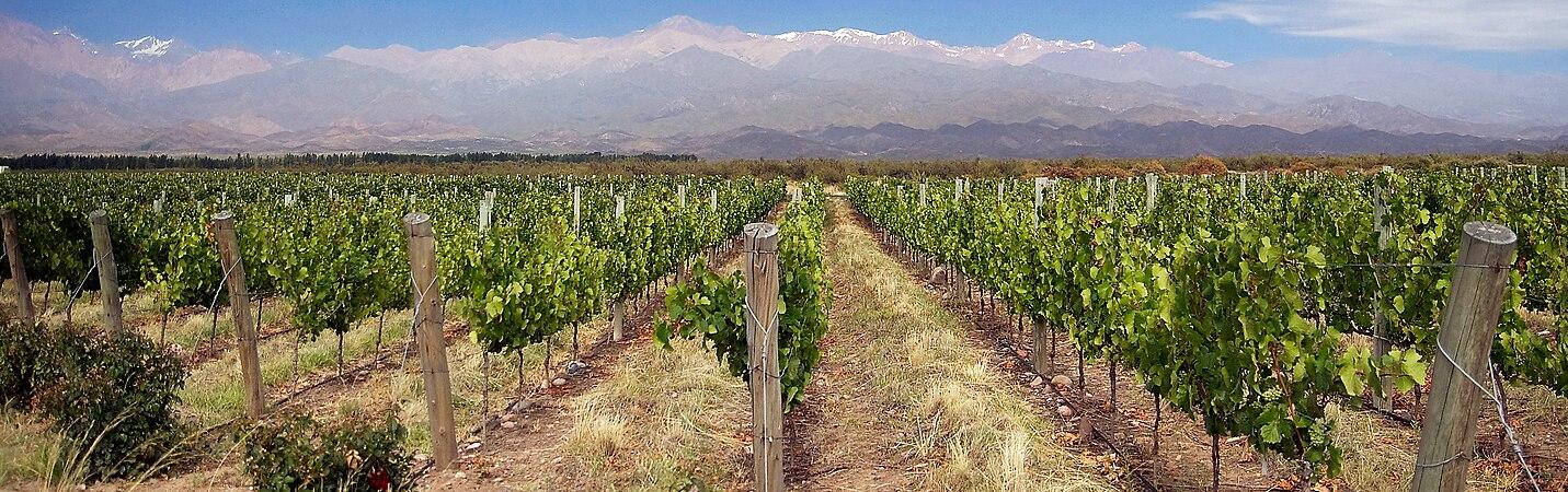 Vignoble Mendoza Argentine.jpg