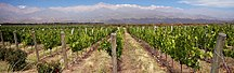 Mendoza Province-Economy-Vignoble Mendoza Argentine