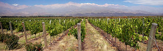 Mendoza wine - Vineyards in Mendoza are often in clear view of the Andes