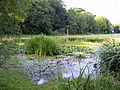 Village pond, Friston - geograph.org.uk - 1414353.jpg