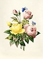Vintage Flower illustration by Pierre-Joseph Redouté, digitally enhanced by rawpixel 87.jpg