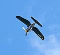 Vought F4U Corsair 9 (7614908242).jpg