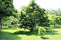WPQc-179 Parc du Bois-de-Coulonge.JPG