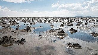 Schleswig-Holstein Wadden Sea National Park - Rockworm piles in the Wadden Sea