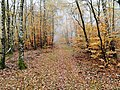 Waldweg im Spessart.jpg