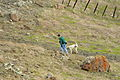 Walking the dog in Santa Teresa County Park.jpg
