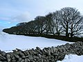 Wall, trees and snowy field west of Rowter farm - geograph.org.uk - 1161491.jpg