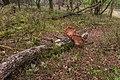 Wandelen over de Planken Wambuis vanuit Mossel 040.jpg