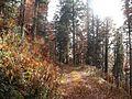 Wanderung im November - panoramio (42).jpg