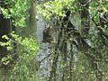 Wapanocca National Wildlife Refuge Crittenden County AR 029.jpg
