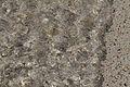 Water, light, sand abstract Iona (15250869215).jpg