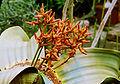 Welwitschia 469-04.jpg