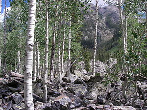 Weminuche Wilderness - Image: Weminuche Wilderness Aspen 2010