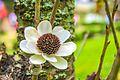 White echinacea.jpg