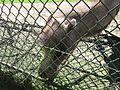 Wielbłąd z zoo w Gdańsku.jpg