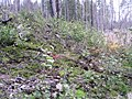 WildFireAreaNHorken0809-vegetation2.JPG