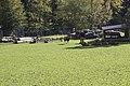 Wildpark Bruderhaus - panoramio.jpg