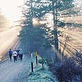 Winter Running, Ashland Watershed Trail Systems, Rogue River Siskiyou National Forest (24889689919).jpg