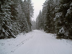 Winter road in Estonia.jpg