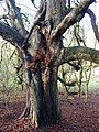 Winter tree - geograph.org.uk - 1612193.jpg