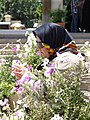 Woman and Flowers - Aramgah-e Hafez (Tomb of Hafez) - Shiraz - Central Iran (7427375594) (2).jpg