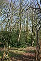 Woodland by Brassey's Contract Road - geograph.org.uk - 393404.jpg