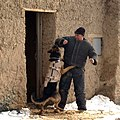 Working dog in Afghanistan, wearing a bulletproof vest, being trained-hires.jpg